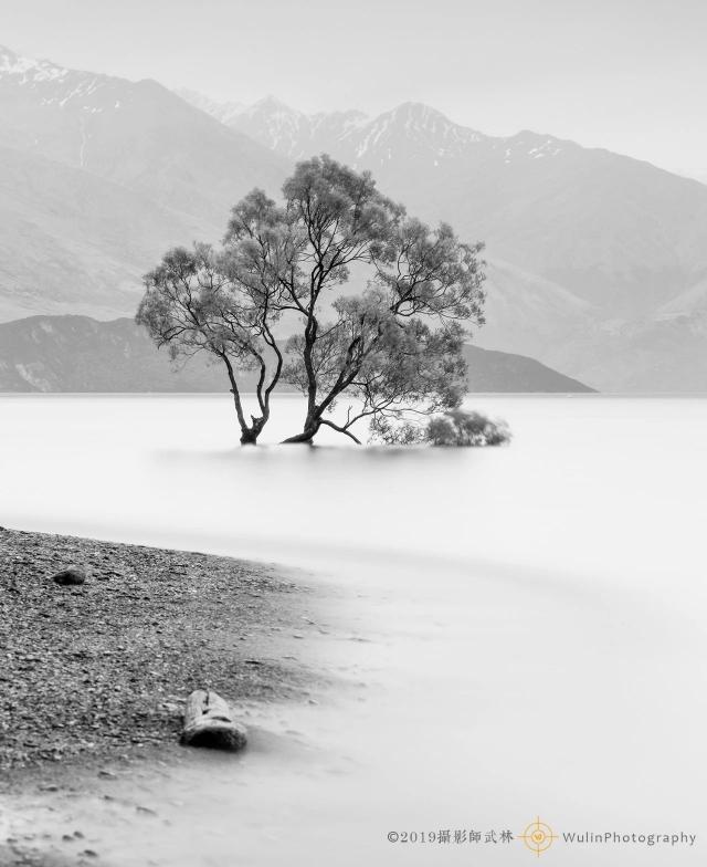 新西兰瓦纳卡一棵树